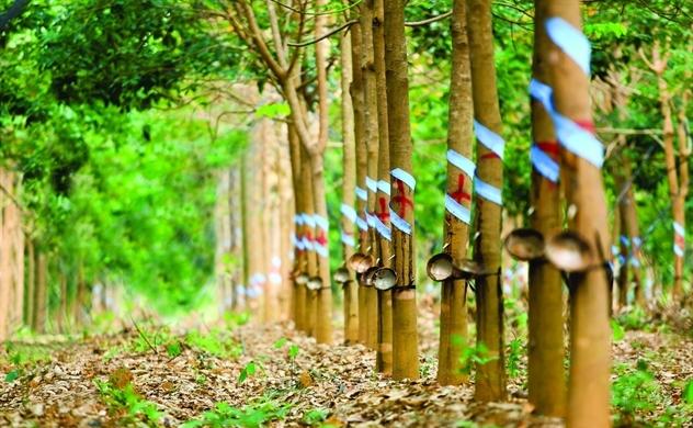 Đầu tư nông nghiệp tại Lào: Bài toán đất đai và lao động