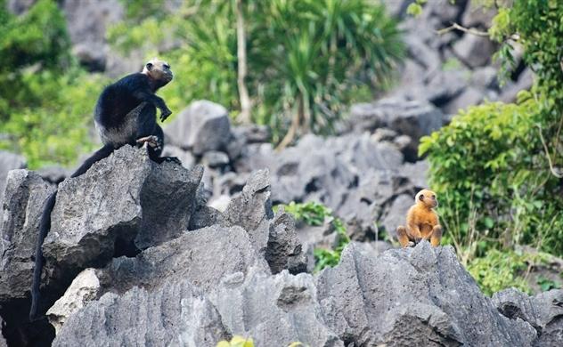 Bảo tồn linh trưởng trong mối quan hệ với rừng