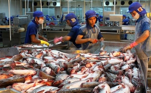 Từ 1.9, thẻ vàng thuỷ sản Việt sẽ lại được EU xem xét lại