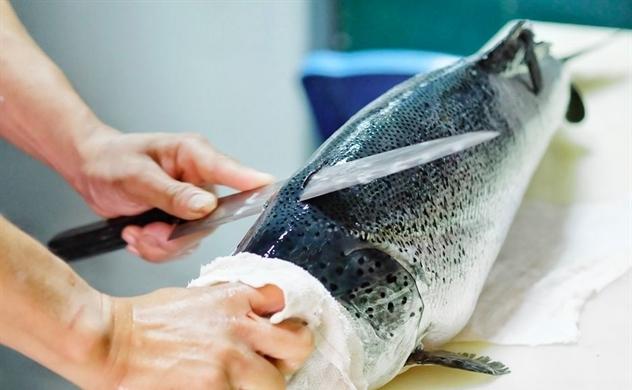 Chuỗi nhà hàng Nhật Morico: Nơi chốn đi về của người yêu ẩm thực