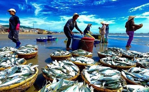 """""""Thẻ vàng"""" EU: Bộ trưởng Nông nghiệp, Chủ tịch địa phương có biển chịu trách nhiệm"""