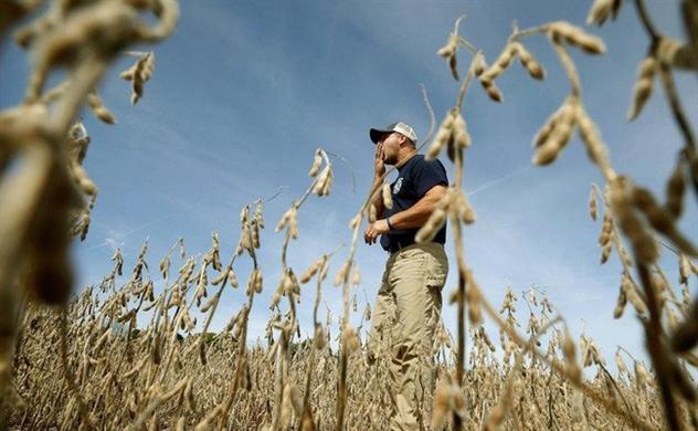 Nông nghiệp thế giới điêu đứng vì chiến tranh thương mại