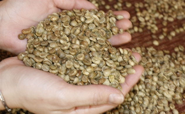 Cà phê Việt hướng tới mục tiêu 6 tỷ USD