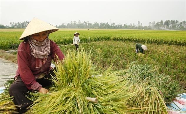 Tích tụ ruộng đất để nâng chuỗi giá trị nông lâm thủy sản