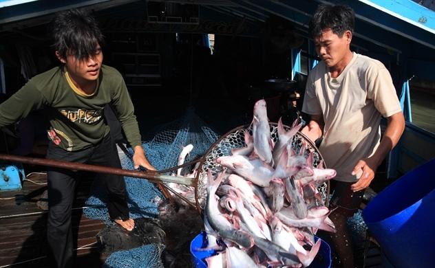 """Gỡ """"thẻ vàng"""" thủy sản: 30 thành viên EC sẽ tới Việt Nam"""