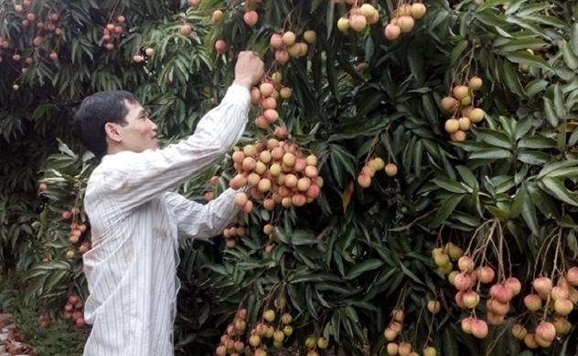 Xuất khẩu rau quả sang Trung Quốc dự báo giảm