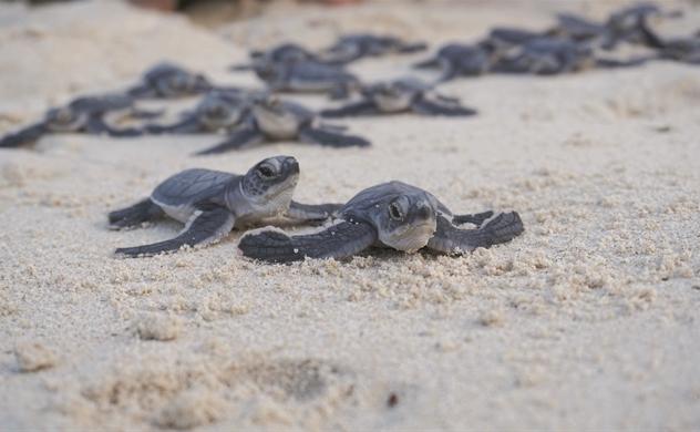 Giải cứu rùa biển!