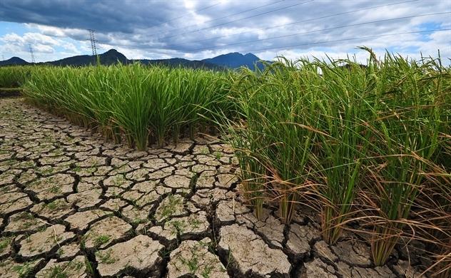 El Nino đe dọa nghiêm trọng an ninh lương thực ở Trung Mỹ