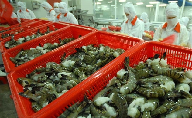 Ấn Độ, Thái Lan giảm thả nuôi: Cơ hội cho xuất khẩu thủy sản của Việt Nam