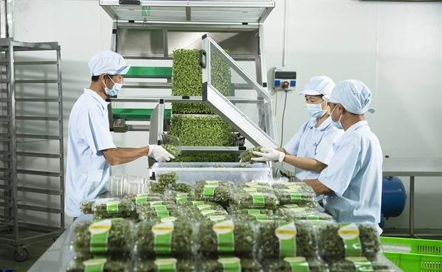 PPP: Chìa khóa mở cánh cửa nông nghiệp bền vững tại Việt Nam