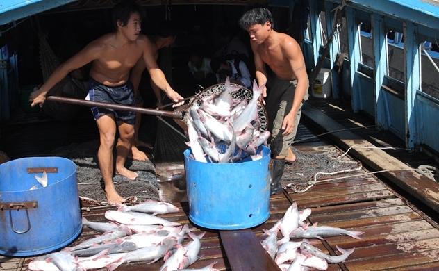 FSIS: Việt Nam đủ điều kiện xuất khẩu cá da trơn sang Mỹ
