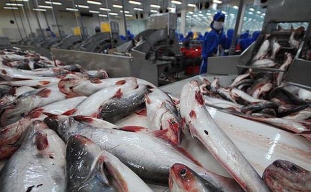 Sau tôm, cá tra lại rộng đường vào Mỹ
