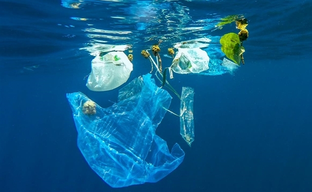 Con người tự đầu độc mình bằng nhựa