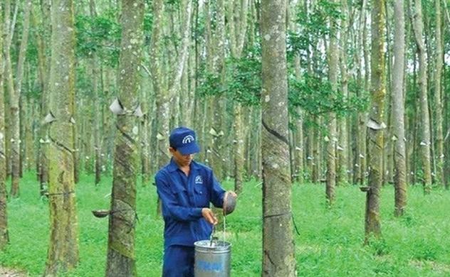 Vượt kế hoạch, Cao su Đồng Phú tạm ứng cổ tức 40%