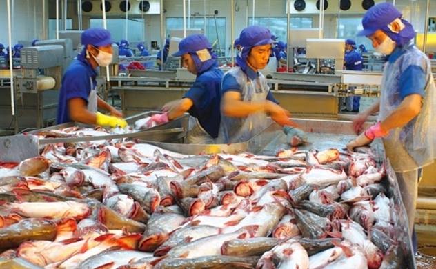 Thua cá rô ở Mỹ, Trung Quốc quay về với cá tra