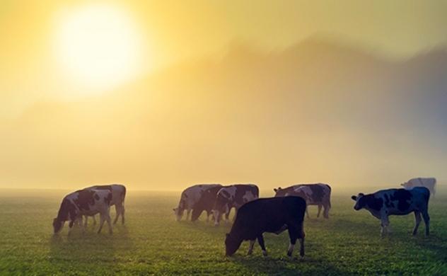 Điều gì sẽ xảy ra nếu thế giới ăn thuần chay?