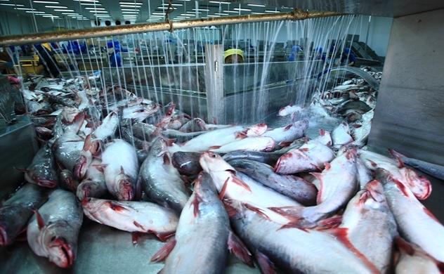 Mỹ lấy lại vị trí dẫn đầu nhập khẩu cá tra của Việt Nam