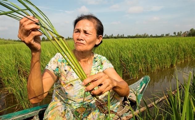 Vai trò của giải pháp hóa nông trong nông nghiệp