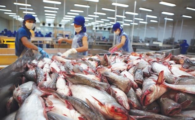 Xuất khẩu cá tra đạt mức kỷ lục 2,3 tỉ USD