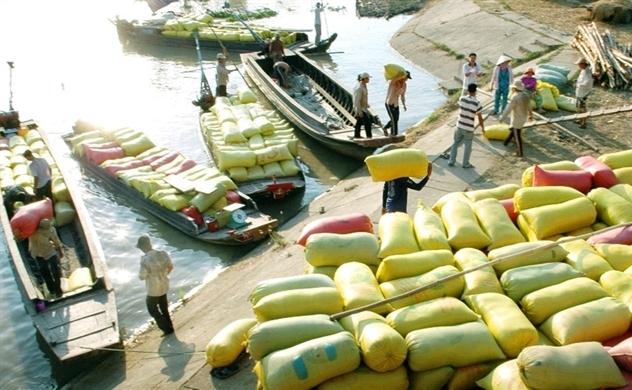 Gạo Việt gặp khó tại Trung Quốc