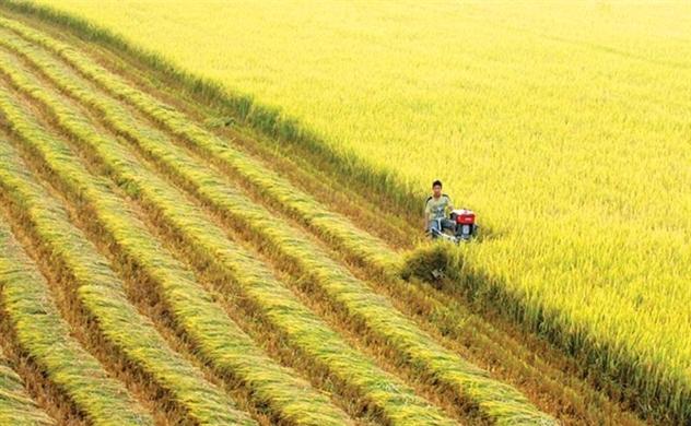Tìm thị trường cho gạo Việt