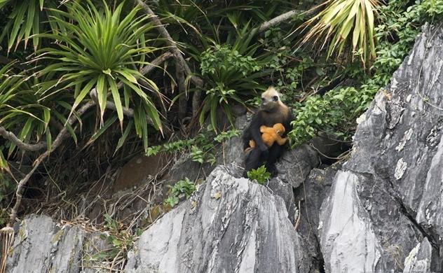 Thêm nhiều loài ở Việt Nam bị đe dọa tuyệt chủng