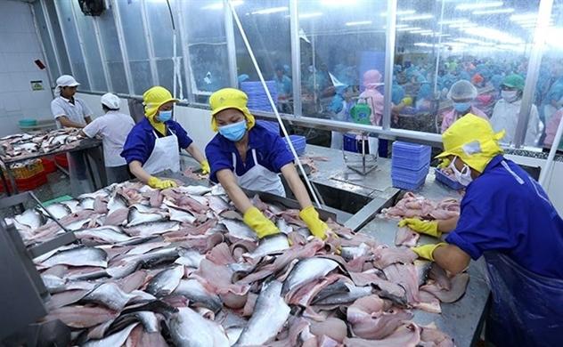Vĩnh Hoàn không ảnh hưởng nếu nguồn cung cá thiếu hụt
