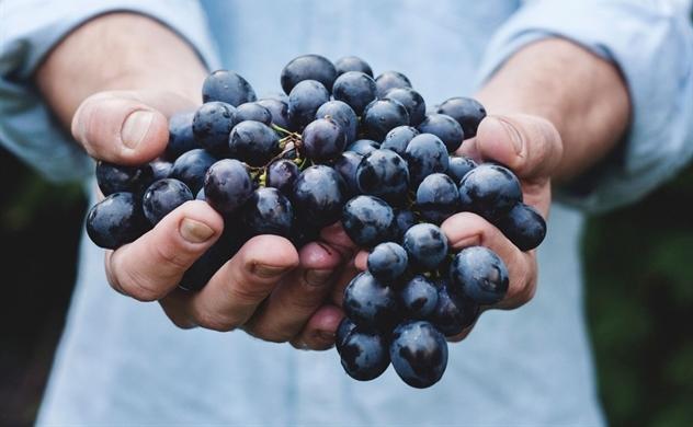 Triển lãm rượu vang Organic tại Việt Nam