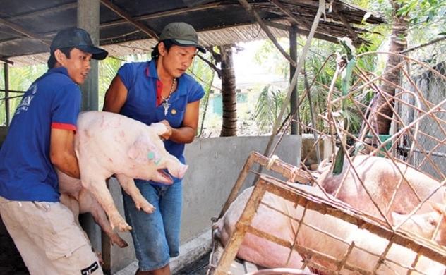 Giá thịt heo giảm mạnh