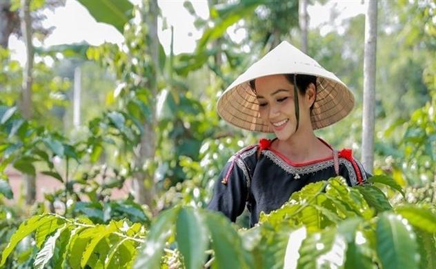 Cà phê Robusta Việt Nam đổ bộ vào thị trường Nhật Bản