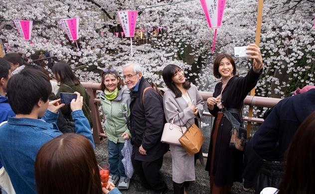Hoa anh đào: Mỏ vàng lộ thiên của kinh tế Nhật