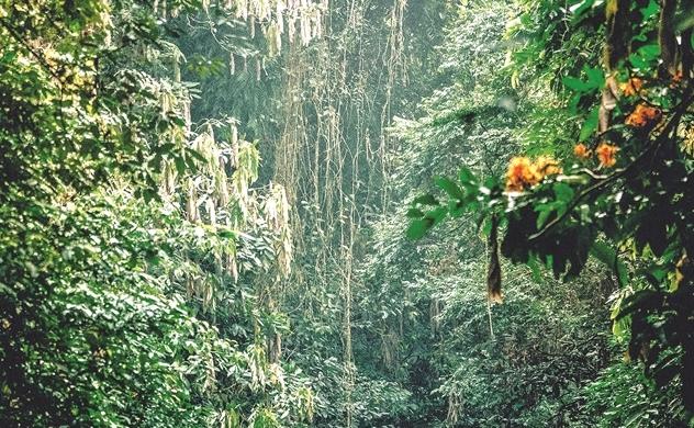 """Hội chứng """"rừng trọc"""" ở Việt Nam"""