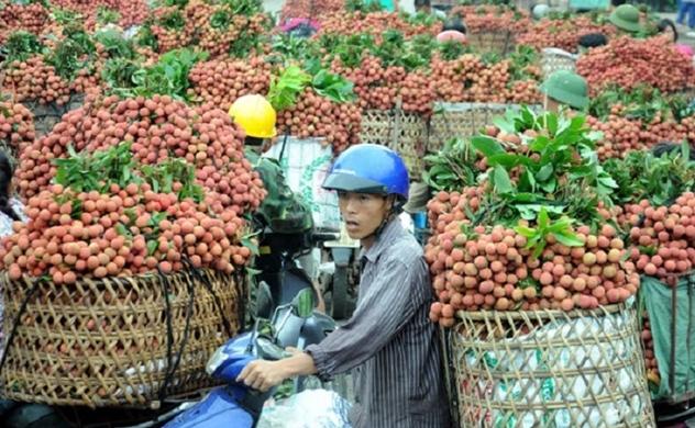 FDI từ Trung Quốc tăng mạnh với tổng vốn 723,2 triệu USD