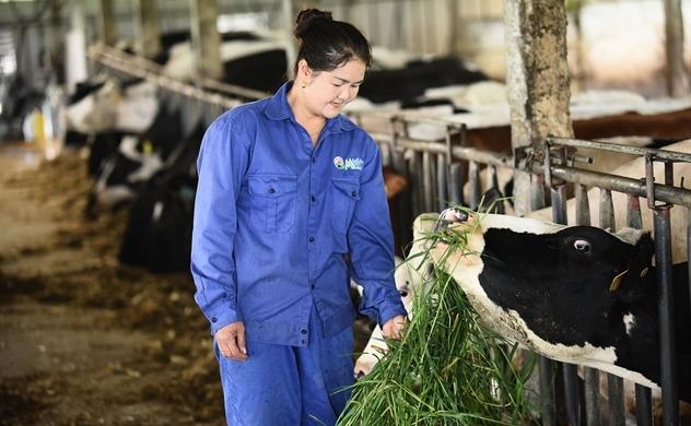 Mộc Châu Milk: Thành công nhờ đồng hành cùng nông dân