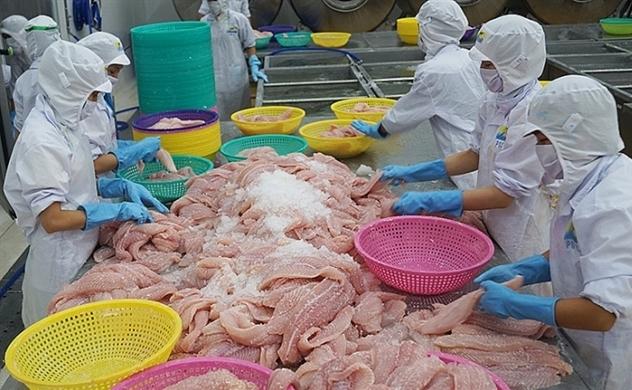 Vì sao xuất khẩu cá tra vào Mỹ và Trung Quốc suy giảm?