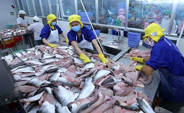 Nhiều doanh nghiệp cá tra Việt Nam