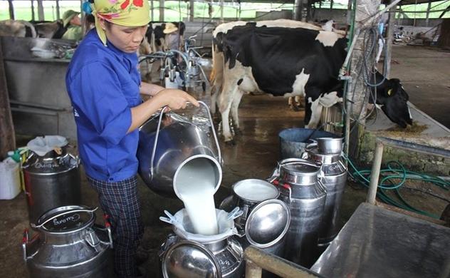 Sữa Việt Nam sẽ xuất khẩu chính ngạch sang Trung Quốc