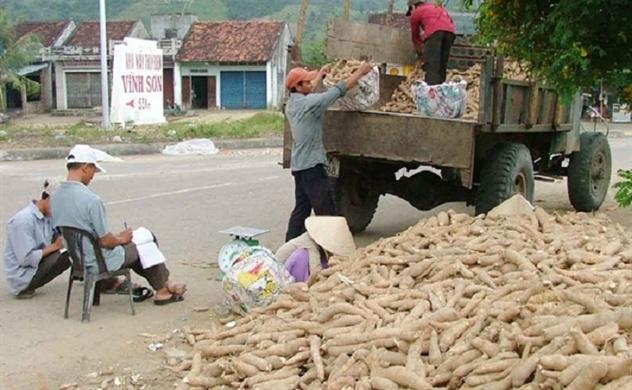 Trung Quốc giảm mua sắn: Các nhà sản xuất đứng giữa ngã ba đường