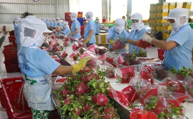 Doanh nghiệp Việt gặp khó khi đồng Nhân dân tệ suy yếu