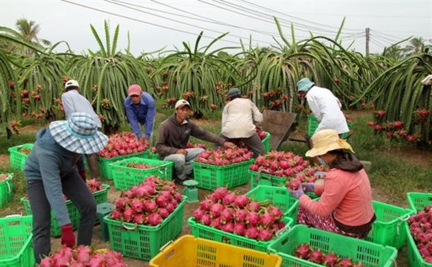 Xuất khẩu trái cây sang Trung Quốc ngày càng khó