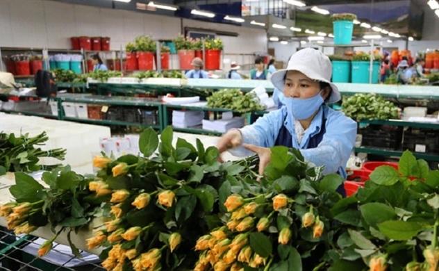 CPTPP: Cơ hội cho ngành nông nghiệp có thể không lớn