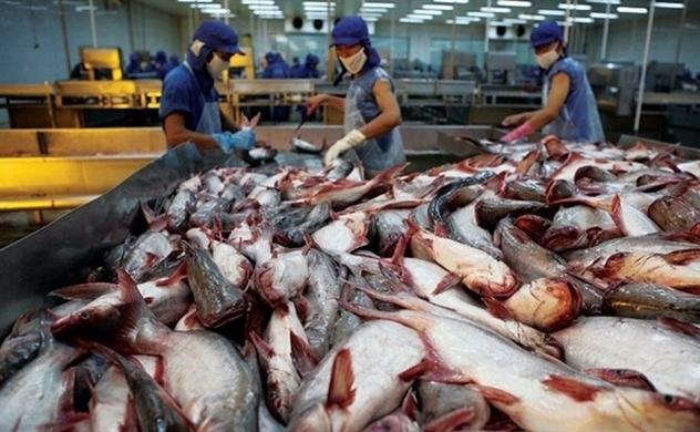 Giá cá tra chạm đáy, Thủy sản Hùng Vương lại lỗ lớn trong Q3/2019