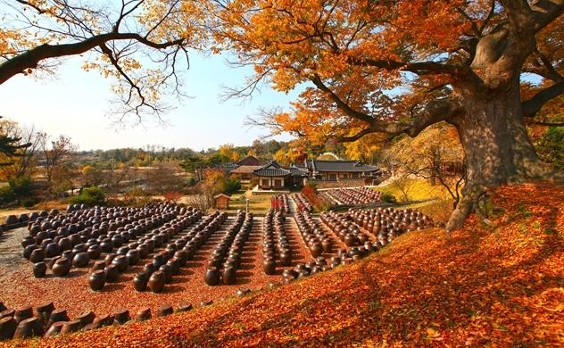 Chính sách hỗ trợ du lịch MICE của Tổng cục du lịch Hàn Quốc