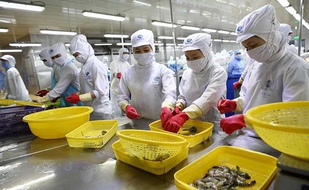 31 doanh nghiệp Việt Nam xuất khẩu tôm vào Mỹ được hưởng thuế CBPG 0%