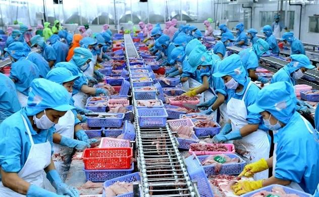 Xuất khẩu cá tra sụt giảm ở Mỹ, tăng mạnh ở Trung Quốc