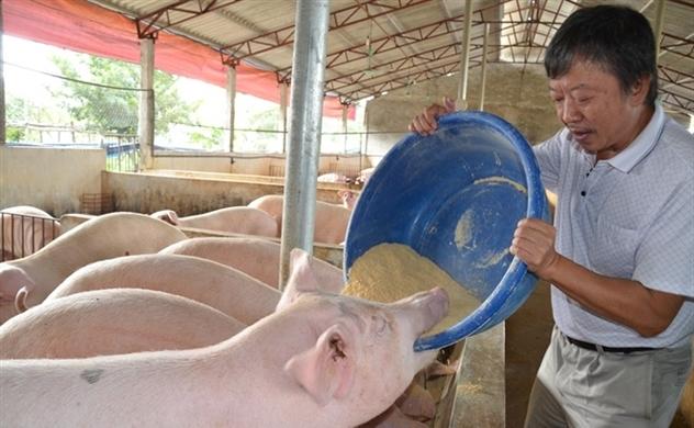 African swine fever outbreak has cut Vietnam hog herd by 20%: Reuters