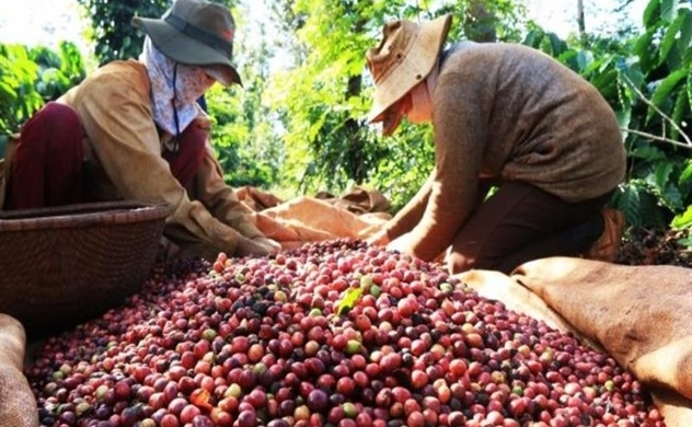 Phones, coffee sales drop cuts Vietnam's October exports by 0.8%