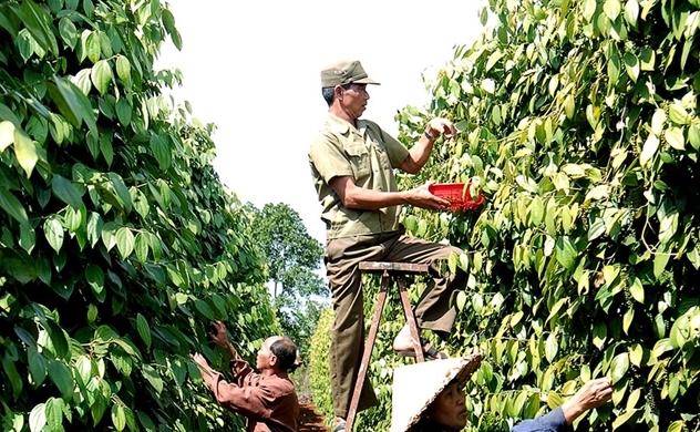 Nikkei: Việt Nam có nhiều tiềm năng trở thành trung tâm nông nghiệp châu Á
