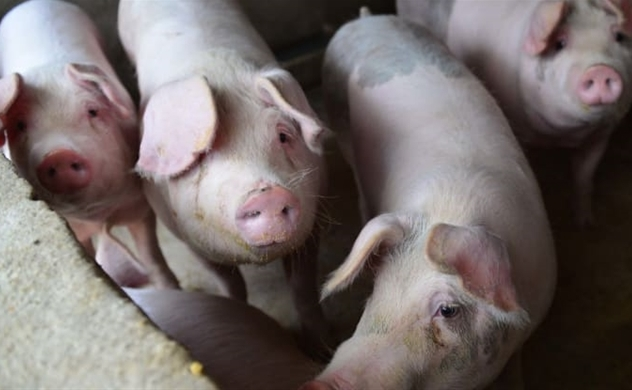 Trung Quốc báo CPI tháng 11 tăng 4,5% do giá thịt lợn tăng hơn gấp đôi