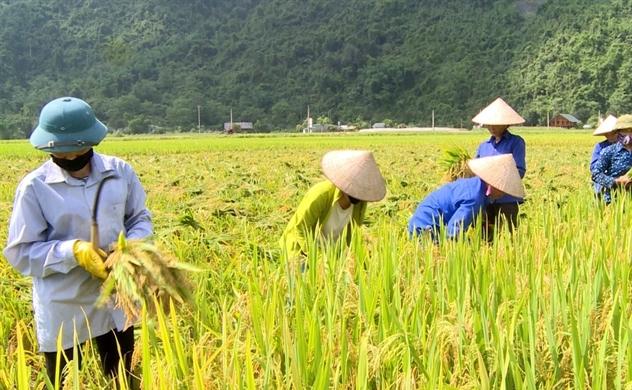 Việt Nam đứng thứ 4 ở Đông Nam Á về an ninh lương thực